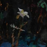 lonewinterflower